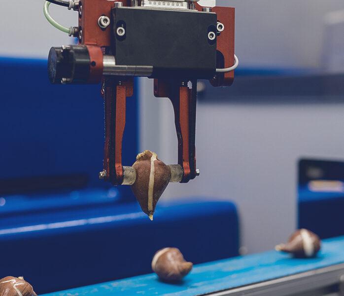 Bulb planting robot