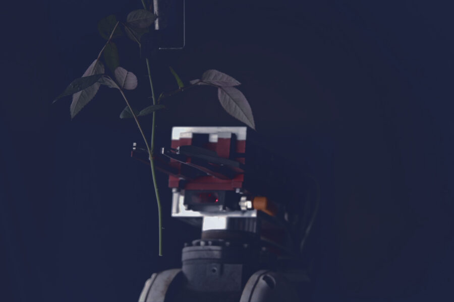 Plant cutting robot